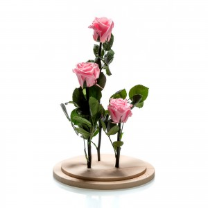 Arrangement 3 pink cryogenic roses