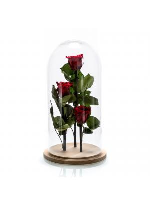 Aranjament 3 trandafiri criogenati rosii