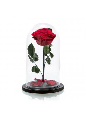 Trandafir criogenat rosu mare